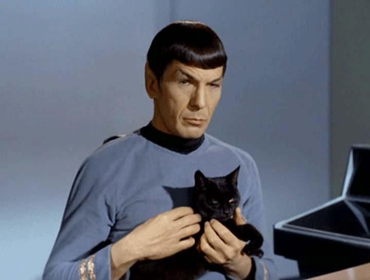 Frases-Fotos-Spock (17)