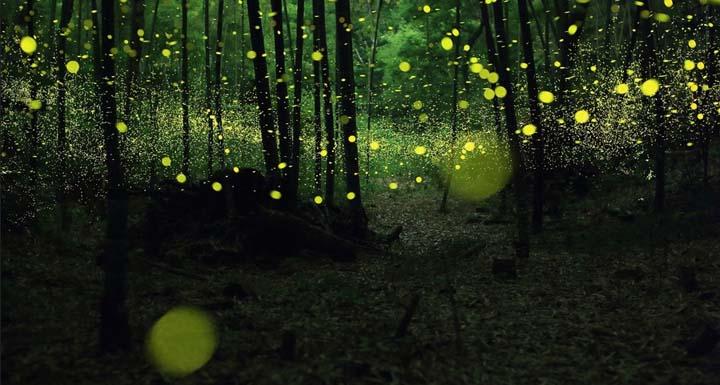 Funciona-lanterna-vagalume (3)