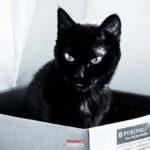 Tudo de bom: Gatos e Cachorros podem aumentar a imunidade contra Covid-19